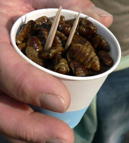 koreanisches streetfood beondegi the korea blog